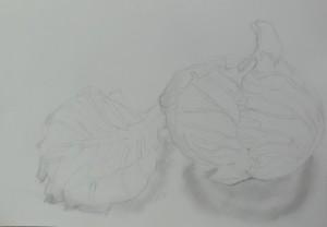 つぼみ-デッサン