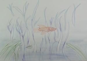 ゆうてつ-(自由)オリジナル熱帯魚