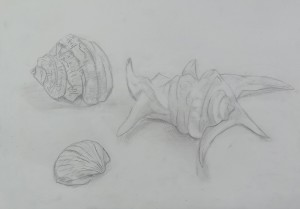 みはる-貝殻3つ