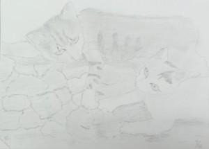 つきの-自由(ネコ)