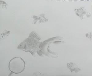 ゆきみ-自由(金魚)